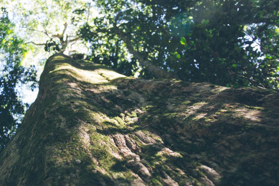 Nature Connectedness